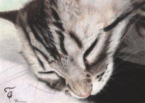 Fannys - Chat pastels secs - Myrtille, Chaton endormi