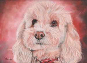 Fannys - Mathys, petite chienne