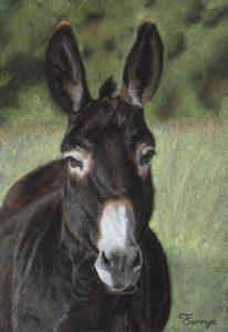 Fannys - âne pastels secs - Cadichon