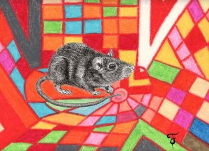 Fannys - Rat et psychédélisme