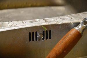 Une graine a germé dans l'évier
